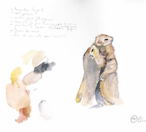 Essais sur un couple de marmotte