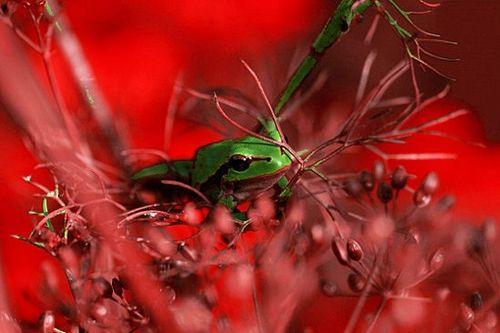 La grenouille se tranforme en prince